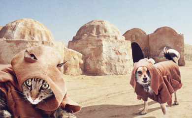 star wars and pets
